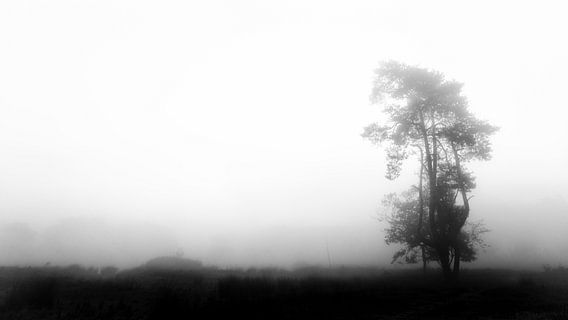 Eenzame boom van Lex Schulte