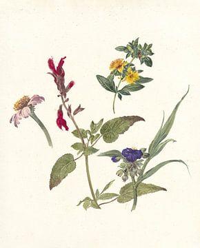 Studies van veldbloemen van Pieter Ernst Hendrik Praetorius, 1837