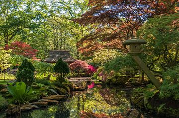 Japanse tuin van Marco de Graaff
