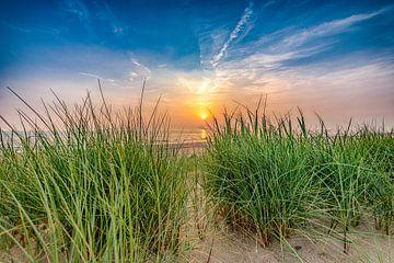 Sonnenuntergang vom Strandgras von