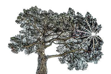 Pijnboom van Harrie Muis