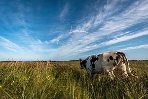 rennende koe