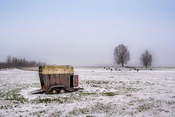 Trailer met schapen van Moetwil en van Dijk - Fotografie