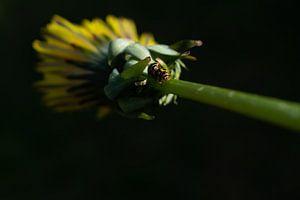 Gele lieveheersbeestjes van Matani Foto