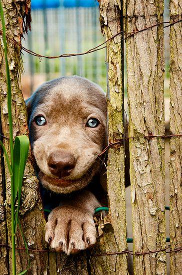 De leukste pup van Mogi Hondenfotografie