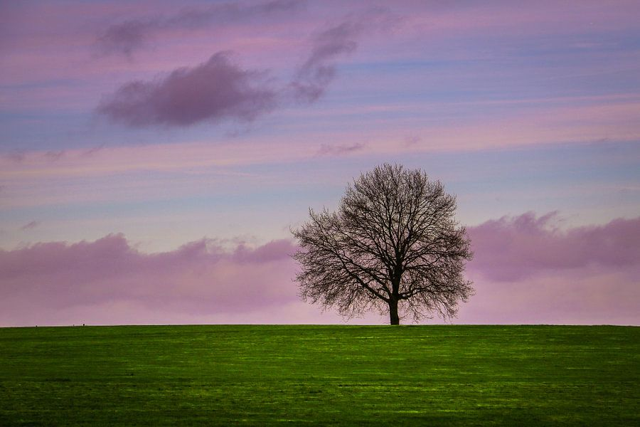 Eenzame boom  van Lily Ploeg