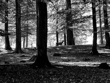 Rust in de natuur van Wilfred Roelofs