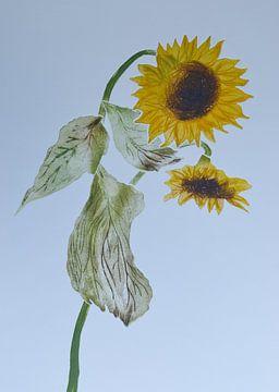 Zonnebloemen   A van Frank van Veen