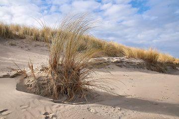 Helmgras in de duinen van Ad Jekel