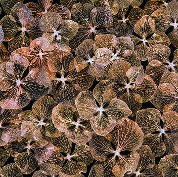 Hortensienblätter von Klaartje Majoor