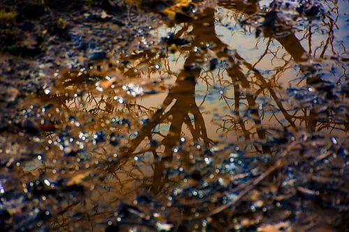 Weerspiegeling boom in water van