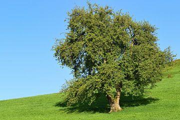Baum auf der wiese von Ulrike Leone