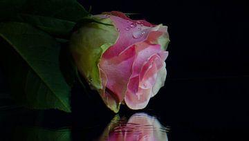 rose roos op een spiegel van Eugene Lentjes