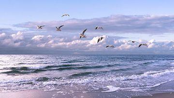 baltische zee met zeemeeuwen van Dörte Stiller