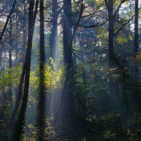 Bomen met contrast van Joran Quinten