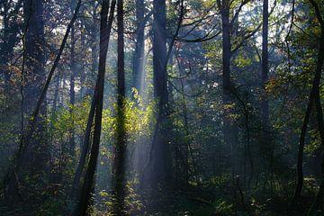 Bäume mit Kontrast von Joran Quinten