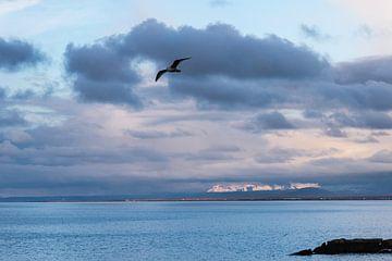 Baai van Keflavik IJsland in avondlicht van