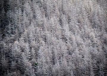 Het Zilveren Bos van Rik Pijnenburg