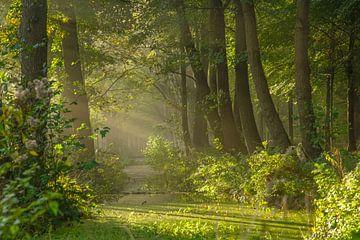 Sonnenharfen im Wald von Dirk van Egmond