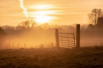 clôture de brouillard sur Tania Perneel