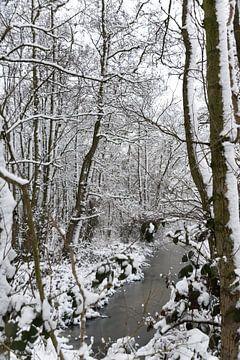 Het donkere, witte bos van As Janson