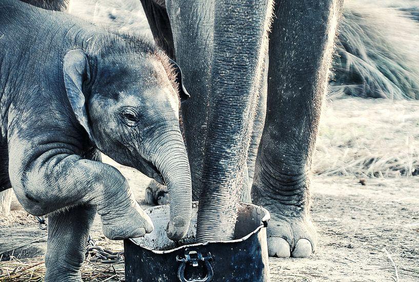 Olifant - Nepal van Dennis Timmer