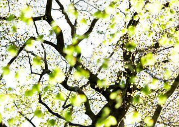 Springleaves van Marieke van der Doef