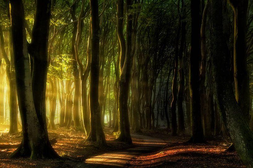 First light.. van Rigo Meens