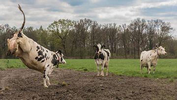 Glückliche Kuh von Ans Bastiaanssen