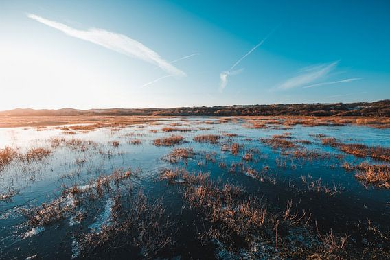 Waterwingebied in de winter