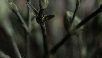 Stahl von Miriam Roodhorst