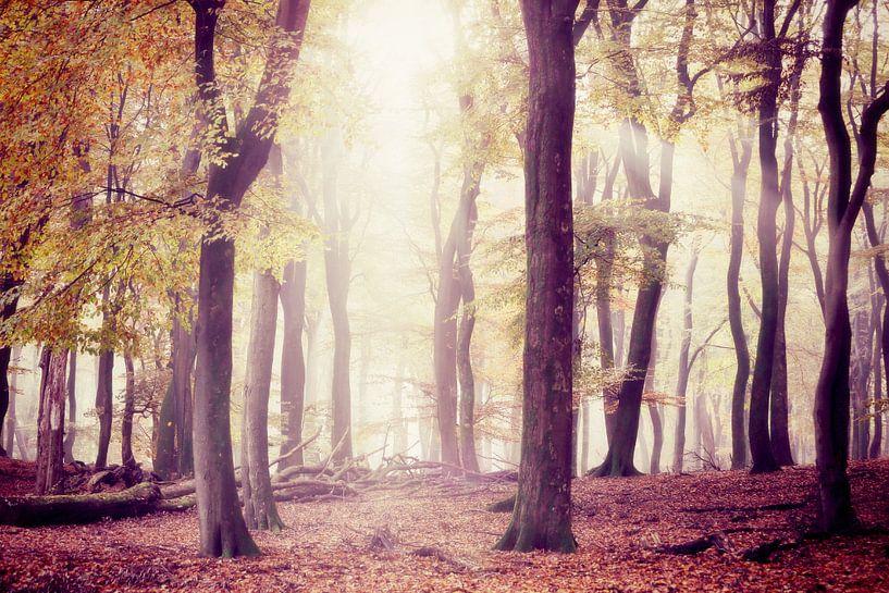 the silent trees....  van Els Fonteine