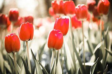 rode tulpenveld van Karin Keesmaat Kijk-Kunst