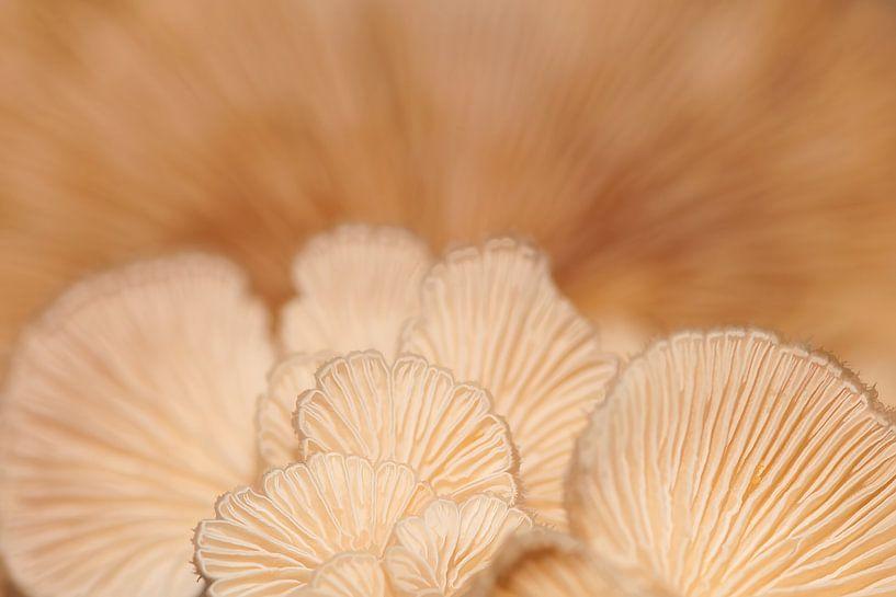 Mushrooms van Monique Simons