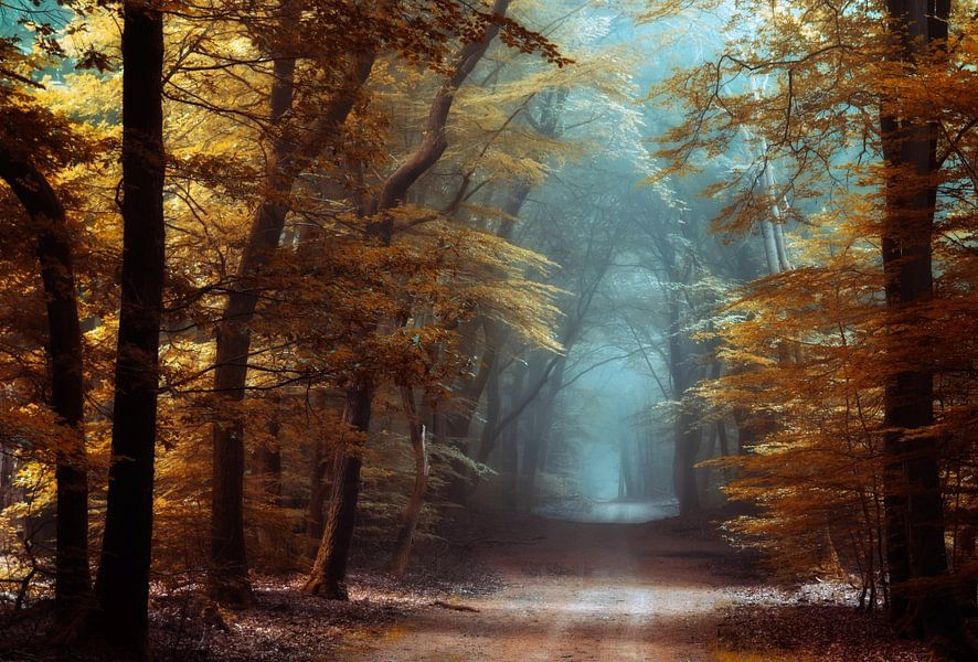 Looks Like Fall. van Inge Bovens