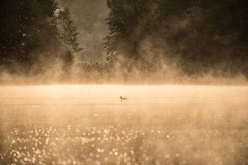 Freundliche einsame Ente von Marc Hollenberg