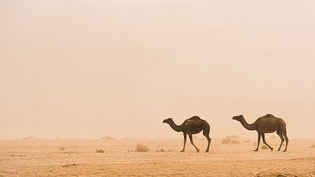 Woestijn #1