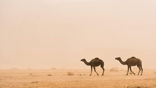Woestijn #1 van