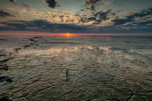 Waddenzee Westhoek van