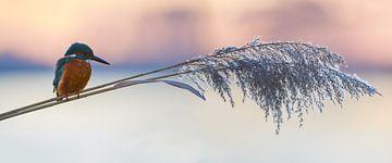 IJsvogel - Winters panorama van