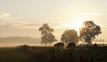 Koeien dampen bij opkomende zon in oktober van Affect Fotografie
