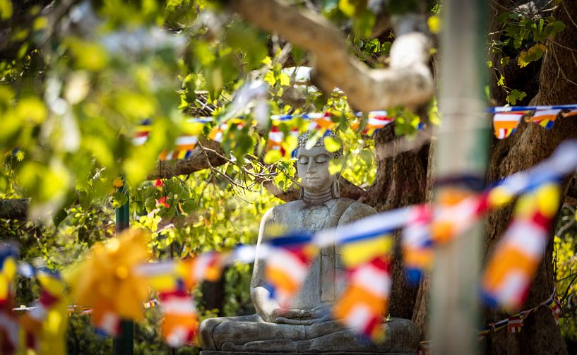 Verscholen Buddha van Eddie Meijer