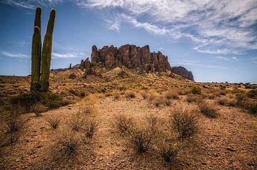 Bijgelovig Saguaro Cactussen van Joris Pannemans - Loris Photography