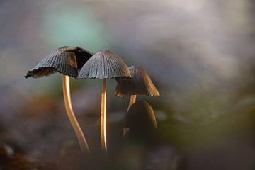 Pilze taupe von Willian Goedhart