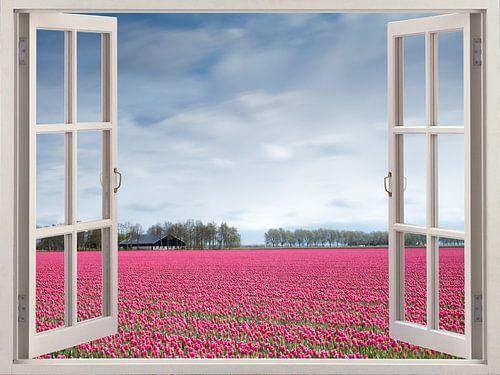 Tulpen in zicht van