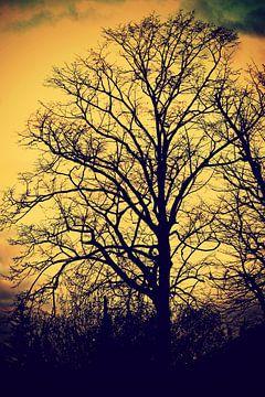 duistere natuur / dark nature / nature obscure van melissa demeunier