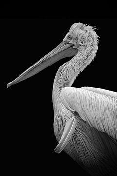 Portret pelikaan in zwart-wit van Marjolein van Middelkoop