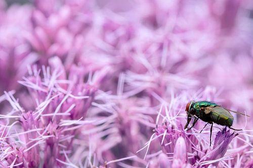 Vlieg op paars/roze bloemenpracht