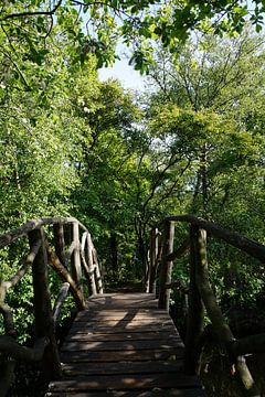 Brücke in der Natur von Martine Overkamp-Hovenga