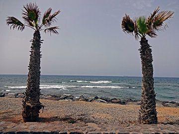 Palmen auf dem Meer von